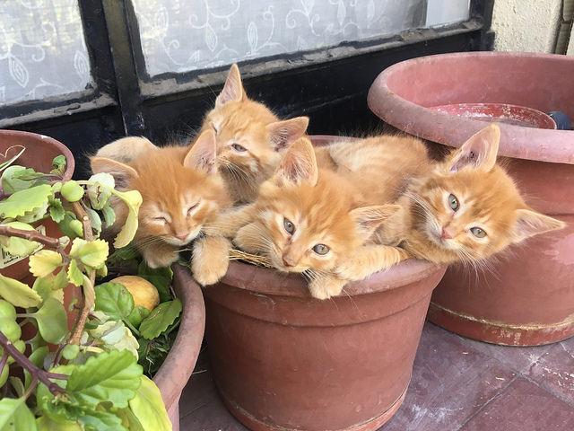 Airbnbで泊まった家にいた子猫