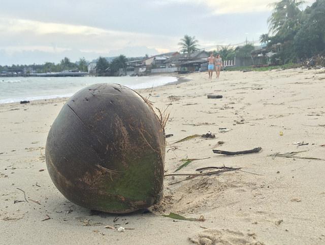 浜辺にココナッツが落ちてる島、それがサムイ島