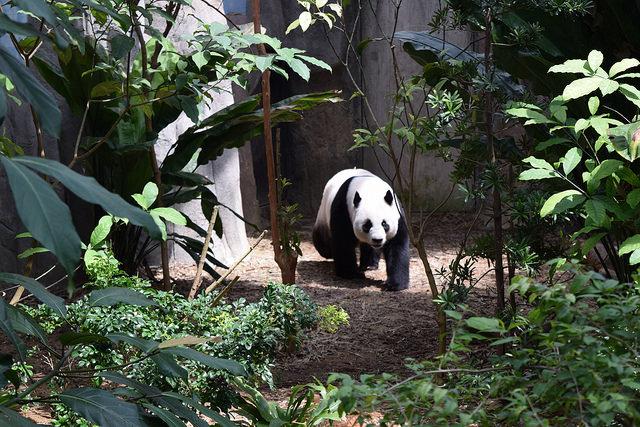 パンダもいるけどここはリバーサファリ