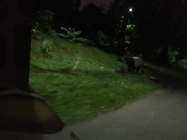 ナイトサファリは本気で暗いので、動物を見つけるとちょっと嬉しい。
