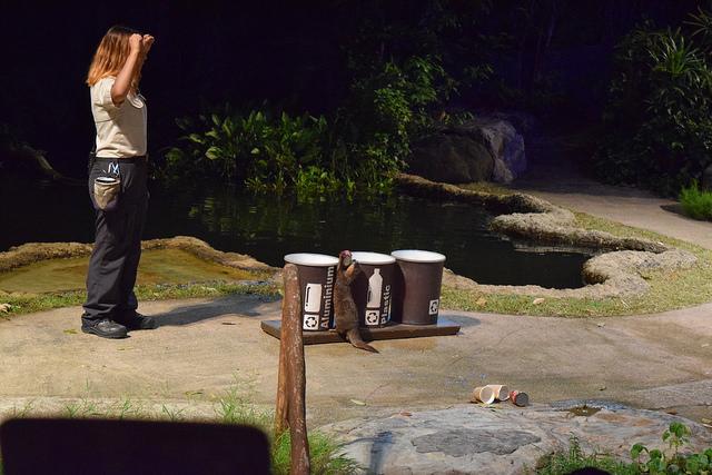 夜のアニマルショー。カワウソくんが一生懸命ゴミを分別したりする。かわいい。