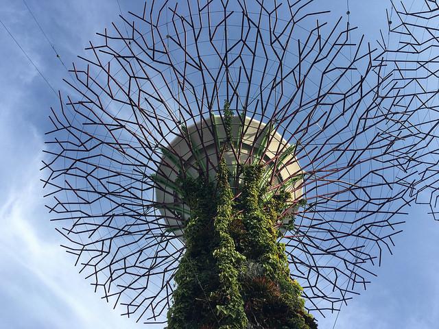 下の方は植物がワサワサしているけど、溢れ出す人工物感。