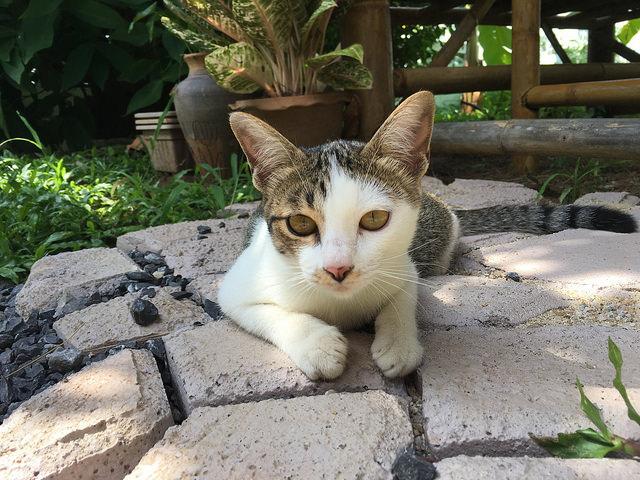 かわいい猫付き