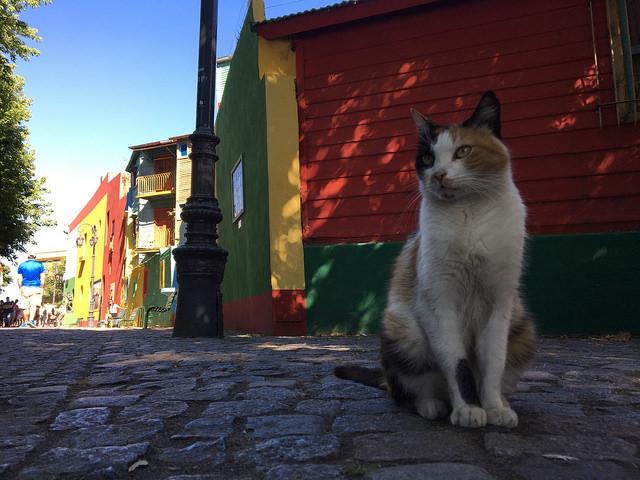 カミニート猫
