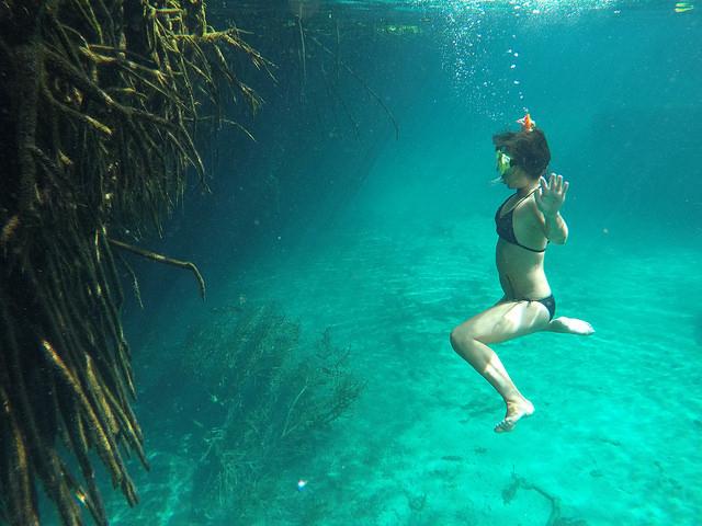 マングローブを水中で観察