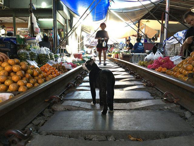 猫も市場でお買い物