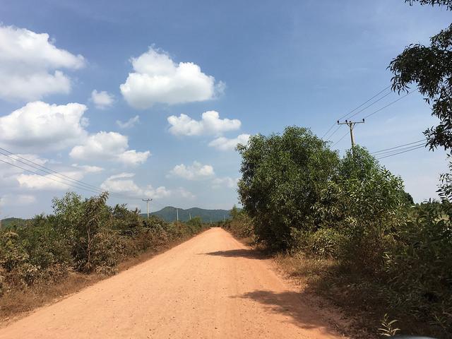 コショウ農園への道